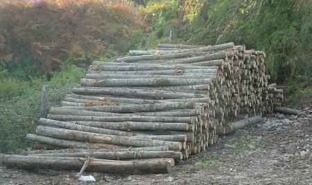 legname di castagno